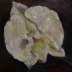 Orchidee, 30 x 30, olieverf op doek, 2020