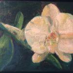 Orchidee II, 20 x 30, 0lieverf op Mdf, 2020
